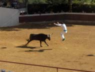 course-landaise-bullfighting-sm